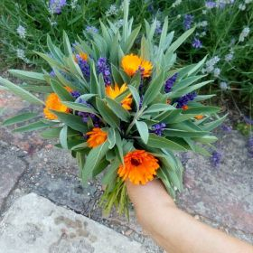 Kozel zahradník - 1